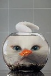 Cat Fishbowl2