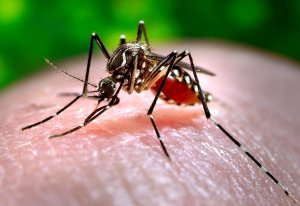 16743-close-up-of-a-mosquito-feeding-on-blood-pv